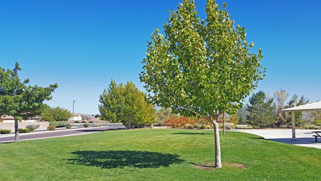 Country Meadows Park in Ventana Ranch